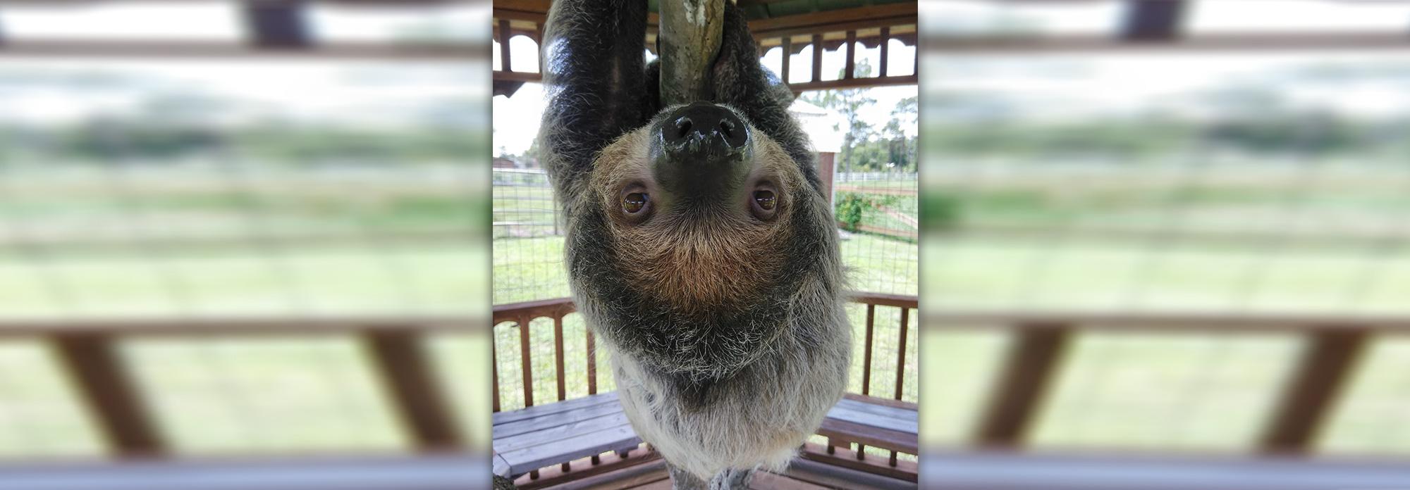 Exotic Animal Encounter | Orlando, FL