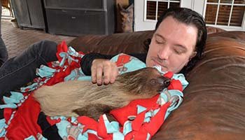 Man on Couch Holding a Sloth