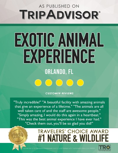 Travelers Choice Award For 2021